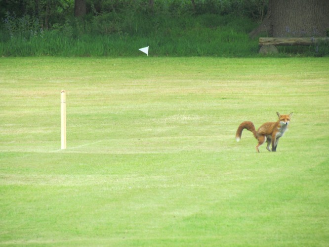 """""""You call this cricket?"""" - Mrs F, pitch intruder at Reigate Pilgrims (full identity not disclosed due to security reasons)."""